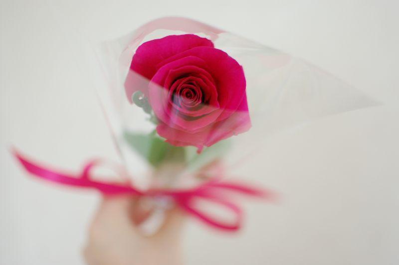 花をプレゼントするには一輪花!おすすめの花や相場ポイントを徹底解説 ...